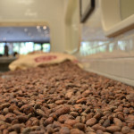 Venezuelan Cacao Beans at HEXX