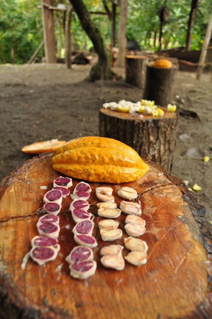 Cacao Seeds Peru, Marañón