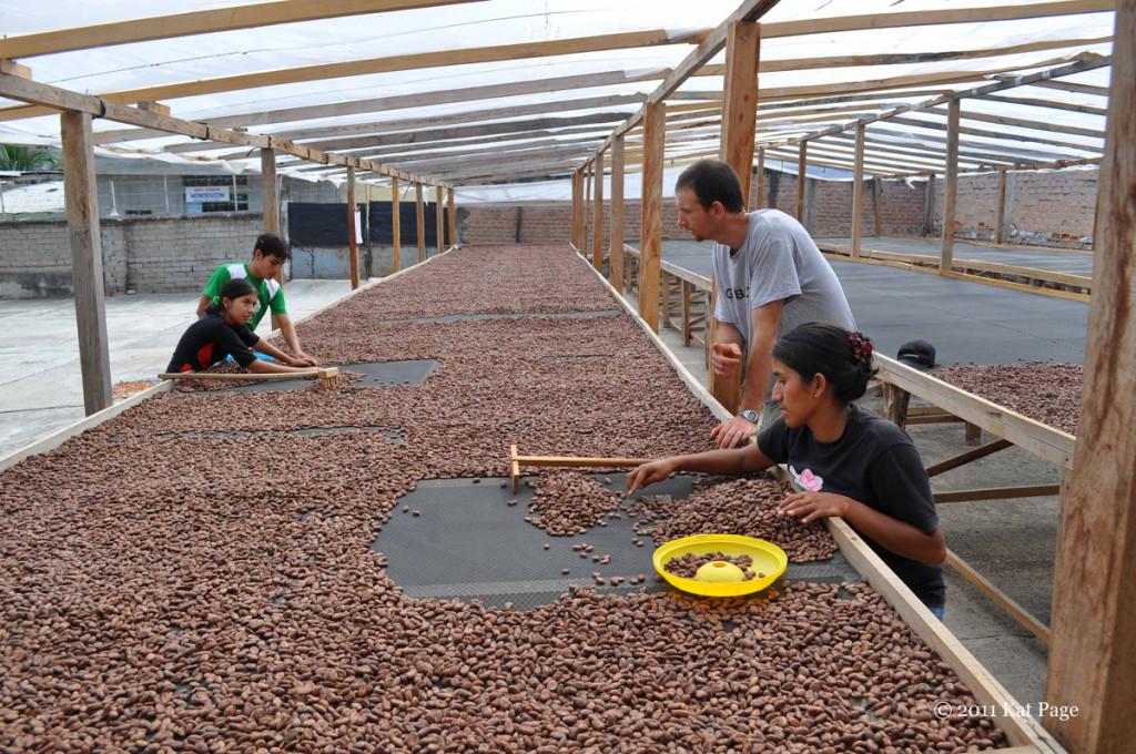 Dried Cacao Beans Marañón, Peru